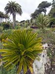 Tresco Abbey Gardens