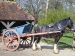 A Horse and Cart