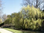 Willows by the River Test