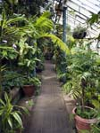 The Glasshouses