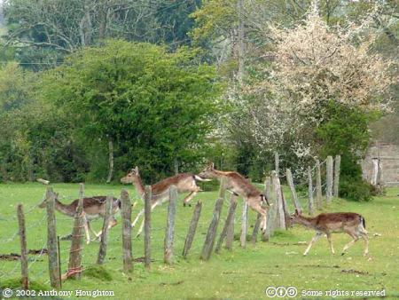 Eyeworth,Deer,Animals,Fritham