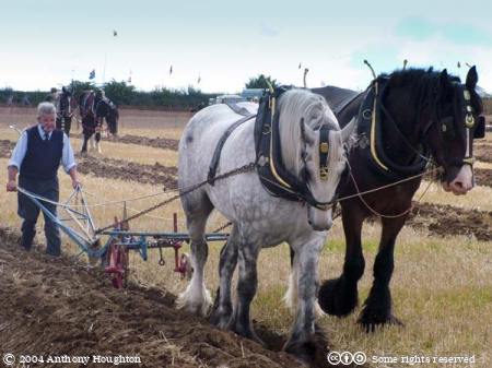 Steam Fair,Heavy Horse,Animal,Ploughing,Plough