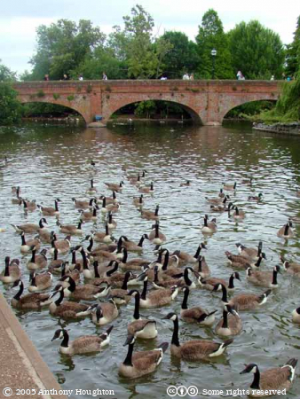 Stratford-on-Avon,Tramway Bridge