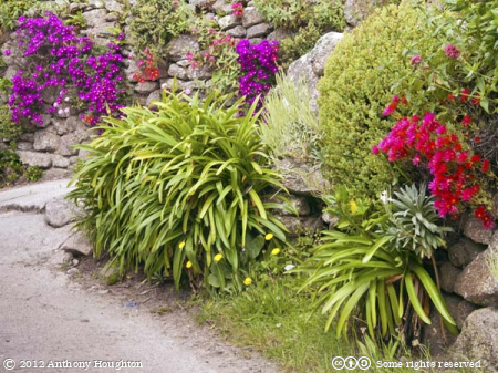 Walls,Bryher,Flowers