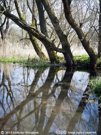 River Test,Houghton Lodge,Stockbridge,Trees