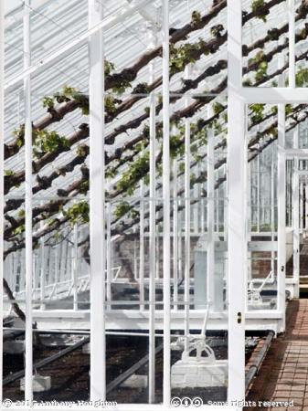 Vines,Greenhouses,Glasshouses,West Dean Gardens