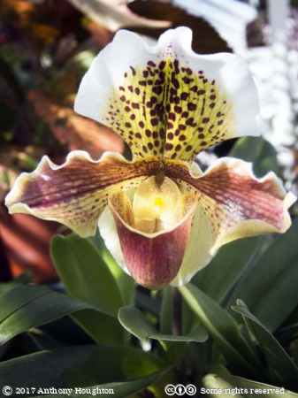Orchid,Greenhouses,Glasshouses,West Dean Gardens